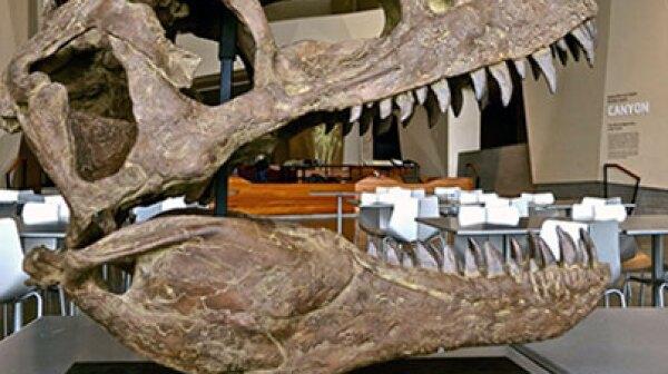 T Rex bones at Natural History Museum