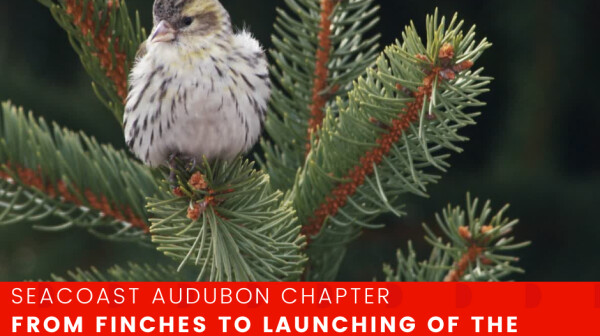 From Finches to Launching of the Finch Research Network - November 10.png