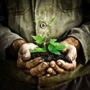 Man hand holding a green young plant