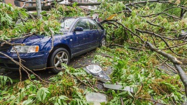 USA, New York, Brooklyn, Car smashed by fallen tree