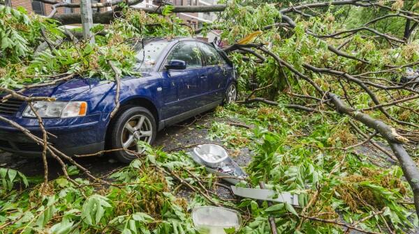 USA, New York, Brooklyn, Car smashed by fallen tree