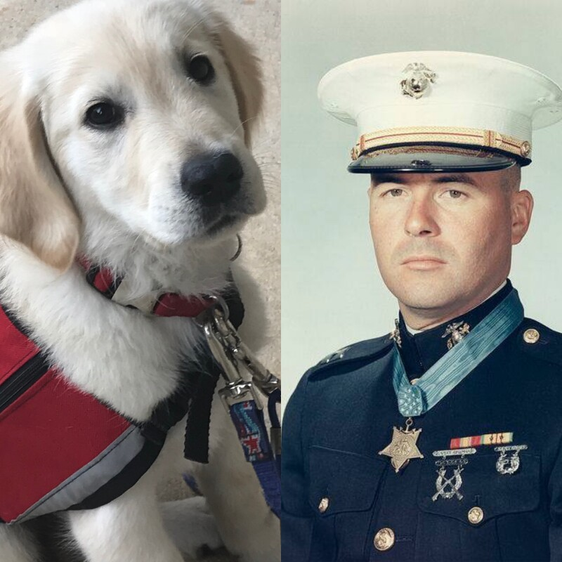 Service Dog In Training-November