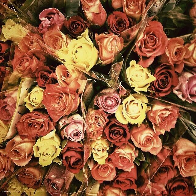 roses-82484_640