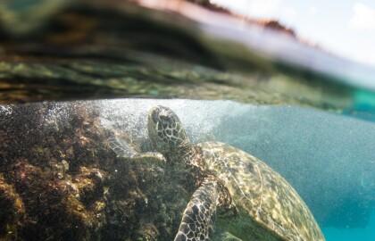Virginia Aquarium and Marine Science Center: Working to Save Our Oceans