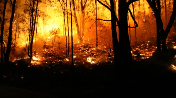 iStock Forest FireXSmall