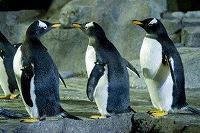 antarcticadventure