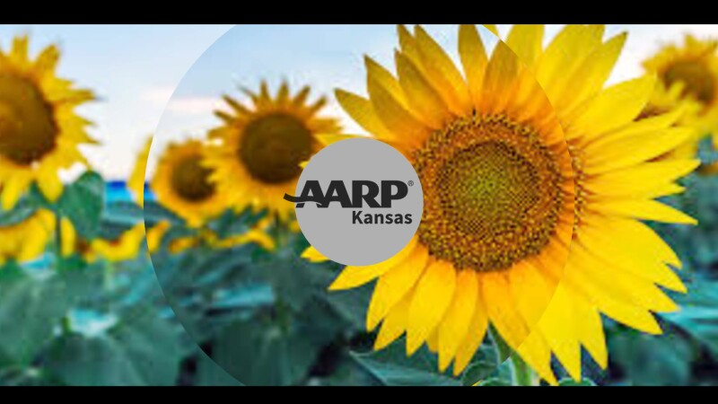 SunflowerScoop photo.jpg
