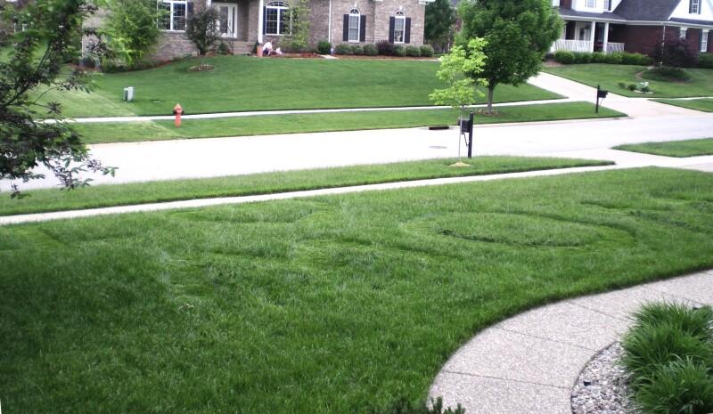 Frank Zhu - I heart mom lawn