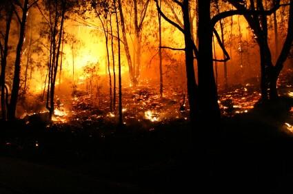 iStock Forest FireXSmall