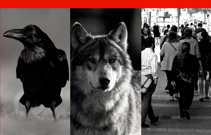 Ravens, Wolves & People