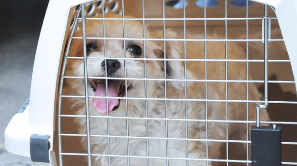 pet-care_travel-safety-tips_main-image