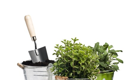 5-Part Container Gardening Series with the UGA Cooperative Extension