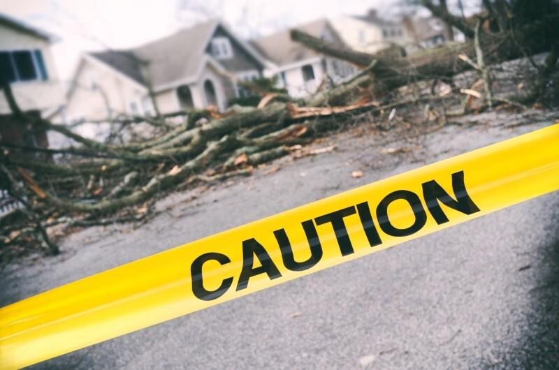 Fallen Trees image.jfif