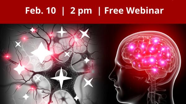 Six Pillars of Brain Health.png