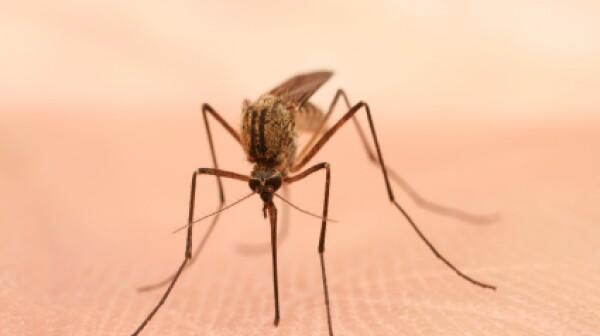 Mosquito_499,999
