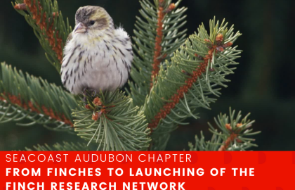 From Finches to Launching of the Finch Research Network