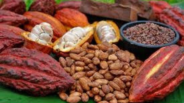 Cacao photo