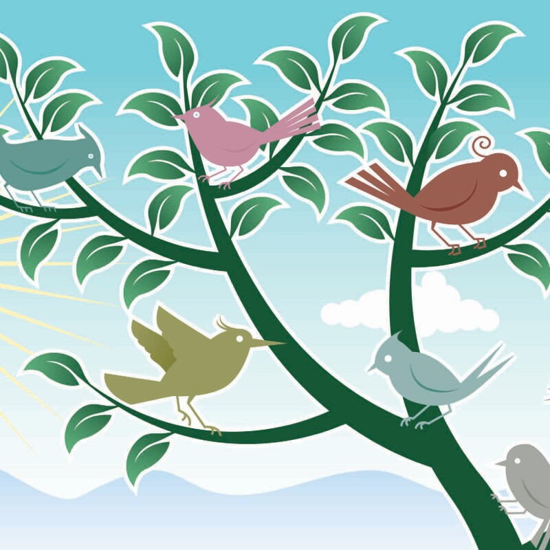 224563-Audubon bird walk