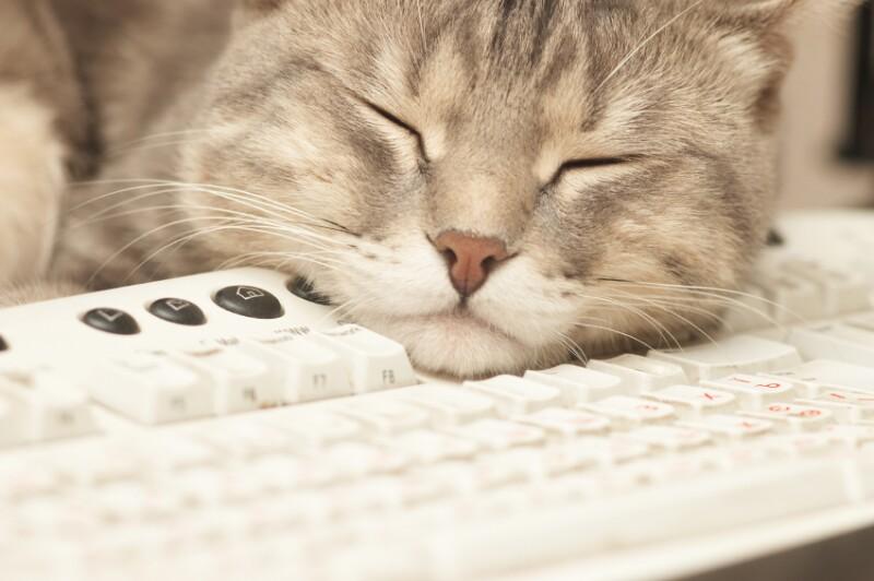 Pause at work: cat sleeping on keyboard