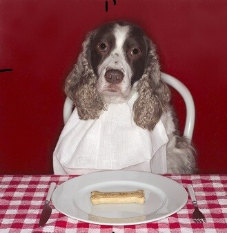 Dog Sitting by Plate with Dog Biscuit