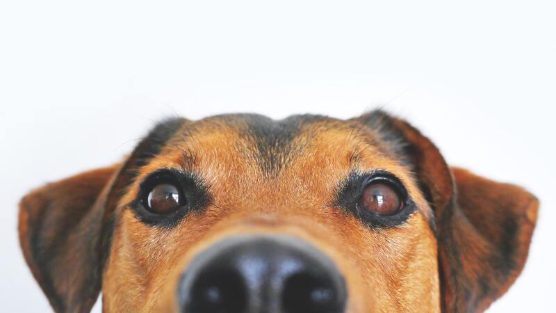 adorable-blur-breed-close-up-406014.jpg