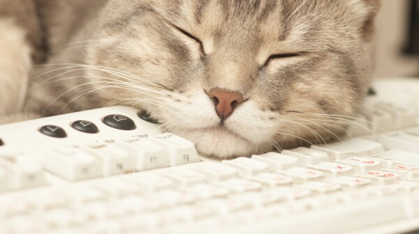 Pause at work: cat sleeping on keyboard