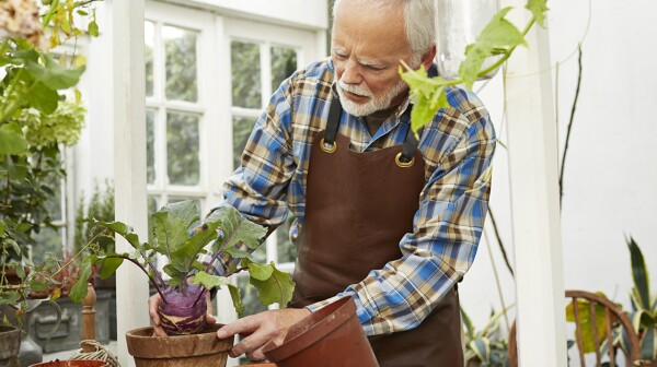 Senior man repotting plant in gardenhouse