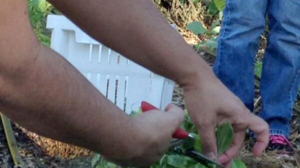 gardening 1 - edited
