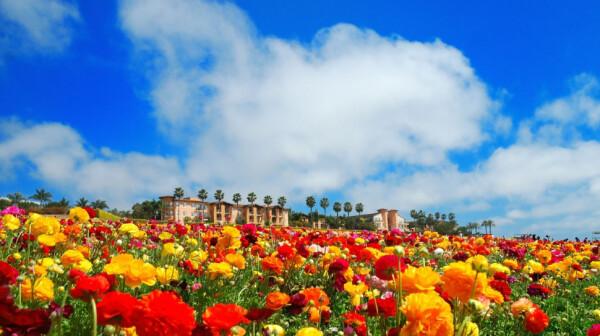 Spring in San Diego, 1.